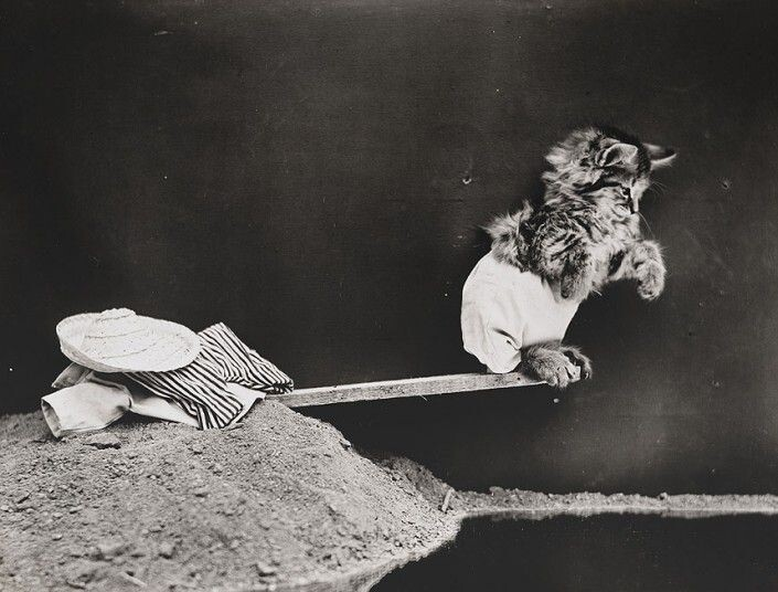 Almost 100 Years Ago, He Took Unbearably Cute Animal Photos.