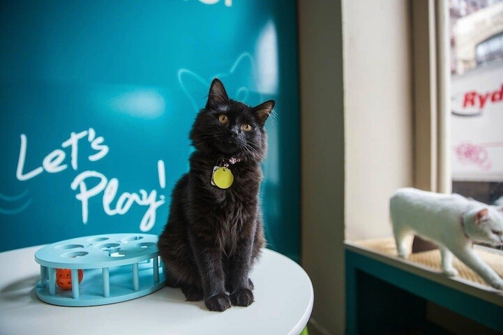 America's First Cat Café Opens: Drink Coffee Alongside Adorable Cats