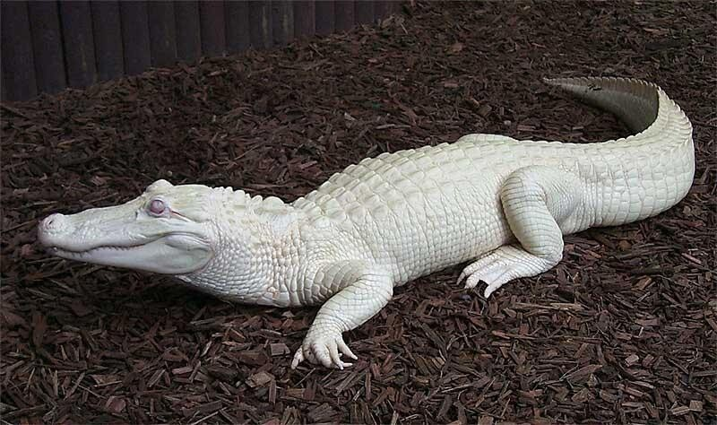 These Albino Animals Are Different… But Beautiful.