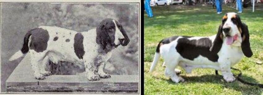 Through Human Intervention, These Dog Breeds Have Changed Over Time...
