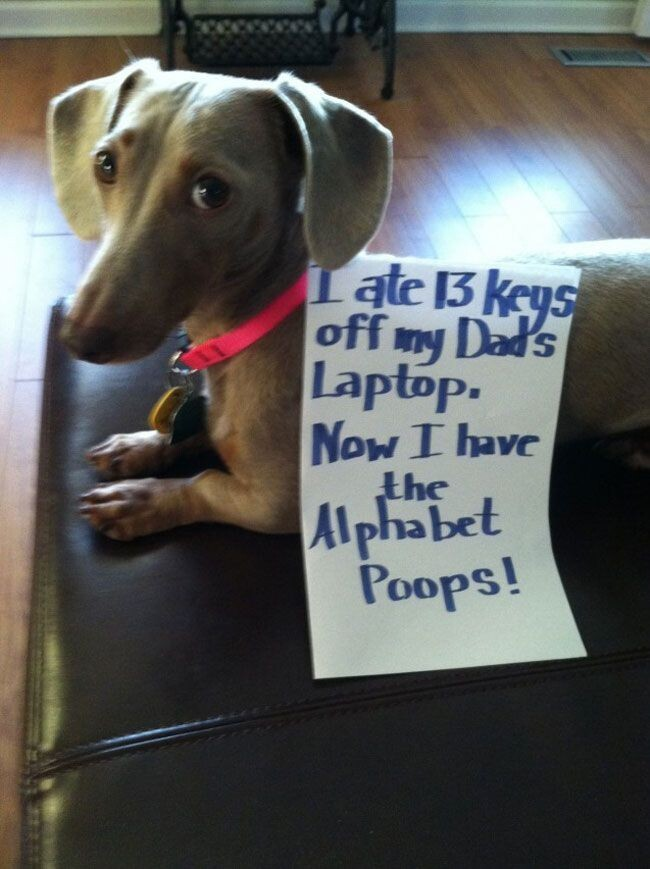 These Dogs Were So Naughty That They Need Publicly Shamed