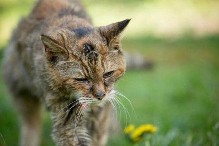 Get Ready To Meet The World's Oldest Cat