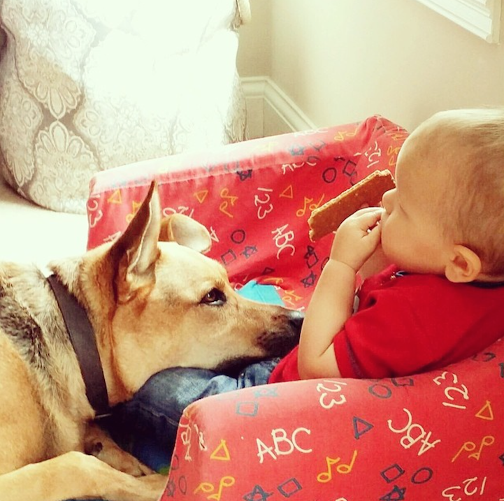 Amazing Friendship Between Adorable Toddler and His Loving Rescue Dog