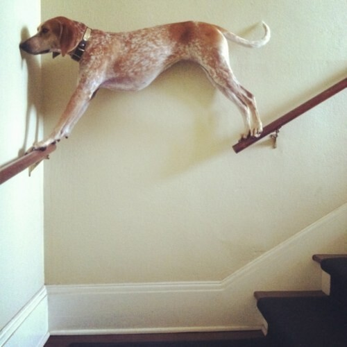 30 Dogs Who Failed So Hard They Won