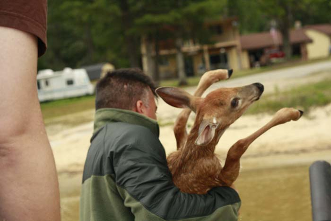 The Most Amazing Deer Rescue Ever