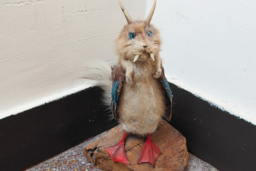 When Taxidermy Turns Terrible