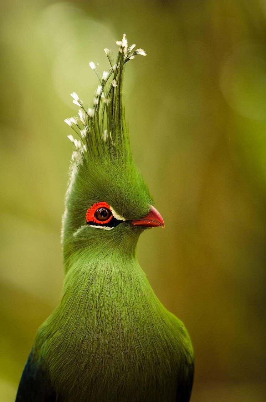 You Didn't Know These Birds Even Existed, But They Do