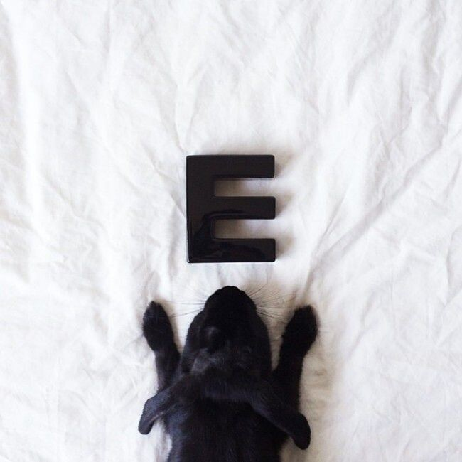Enid Is Instagram's Adorable Rabbit Who Loves Posing For The Camera