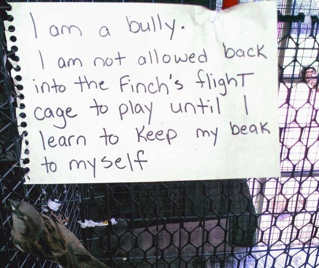 23 'Bird Shaming' Moments Show That They're Quite The Troublemakers