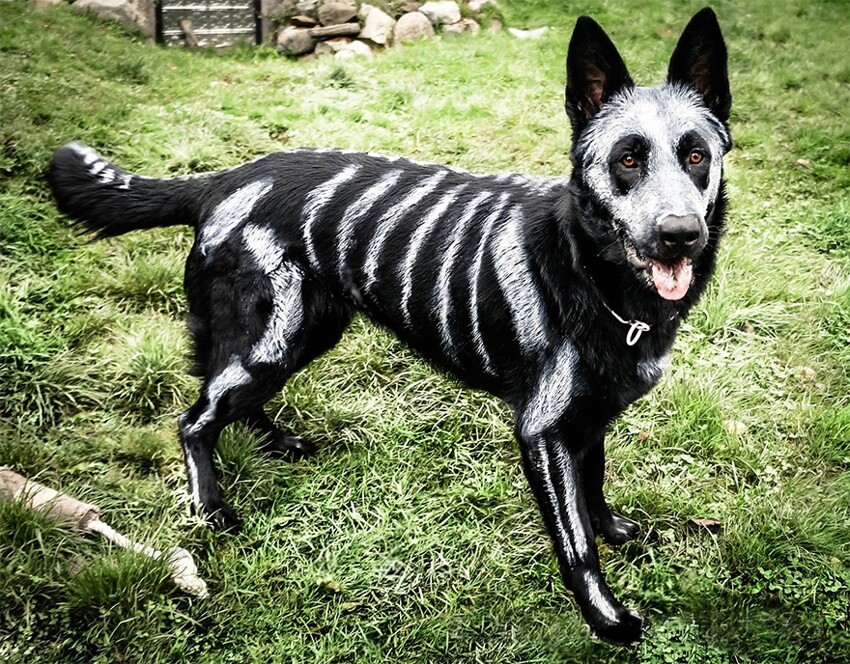 Non-Toxic Face Paint To Turn Your Animals Into Creepy Skeletons
