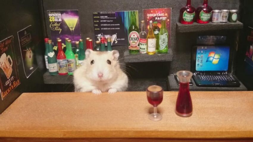 You Will Want to Be a Regular at This Adorable Bar