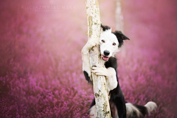 Adorable Dog Photography That Will Make You Happy by Alicja Zmyslowska