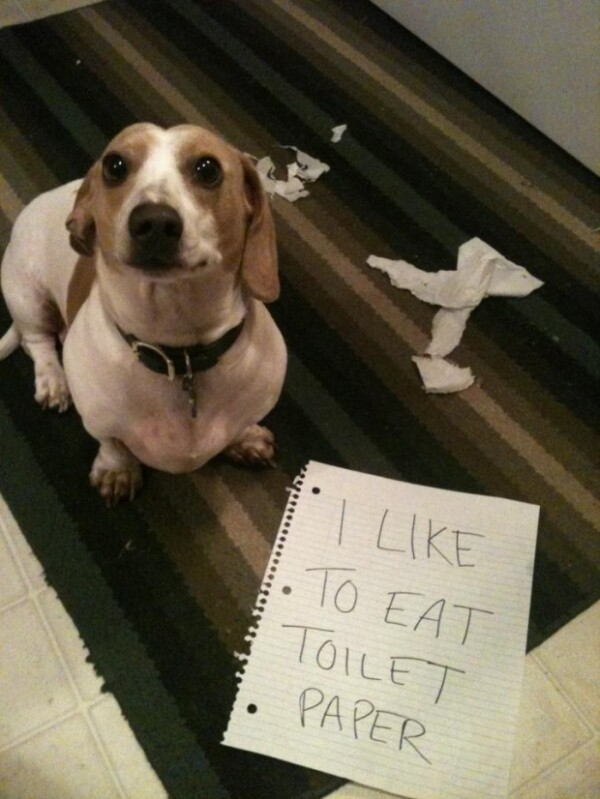 Hilarious Pets Facing Public Shaming That Will Make You Say AwWw!
