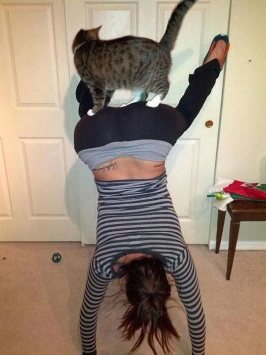 17 Perfect And Adorable Uses For Your Cat