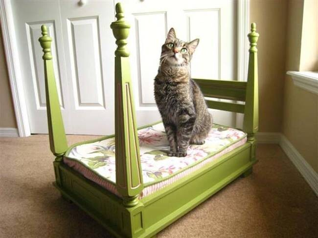 These DIY Funky Pet Beds Are Totally Worthy
