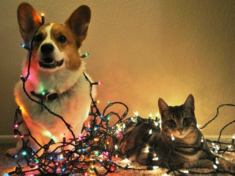 Pets VS Christmas Decorations