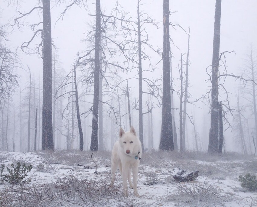 Wild Adventures Of A Man And His Dog In Majestic Nature Photos