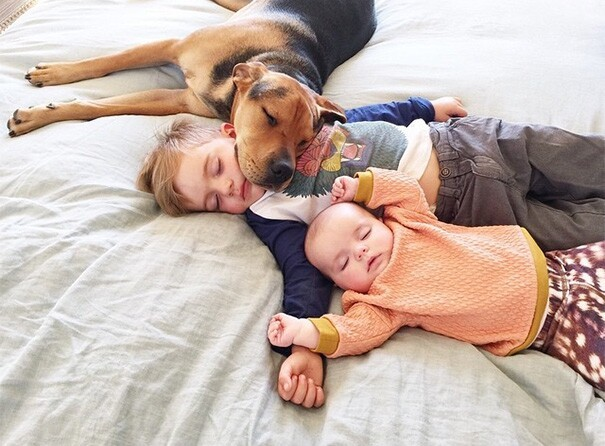 Famous Napping Boy And Puppy Duo Gets A New Nap Friend – A Baby Sister