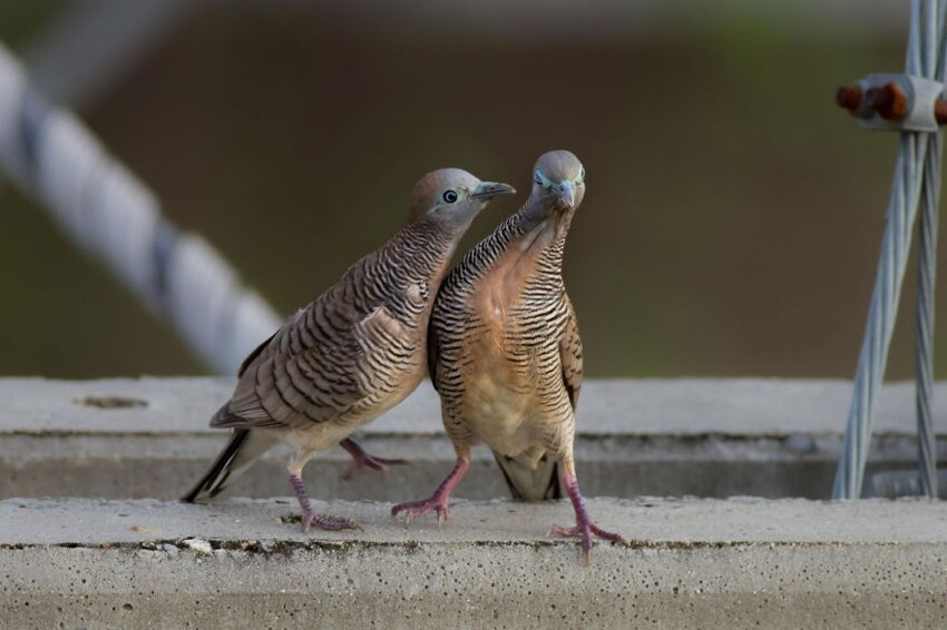 Share Your Best Photos Of Loving Bird Couples
