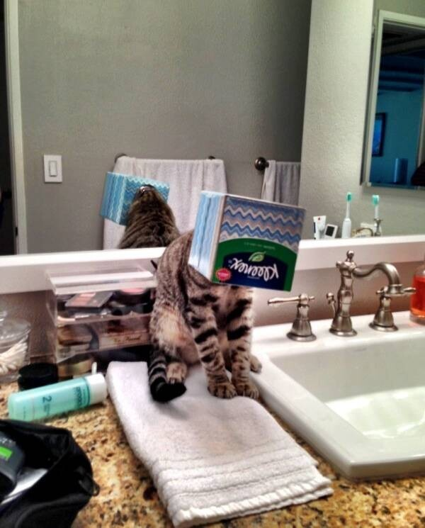 These 20 Pets Will NOT Give You Some Privacy In The Bathroom