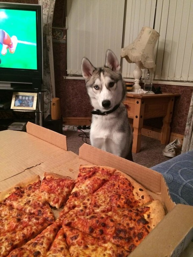 These 40 Pets Love Pizza More Than Life Itself