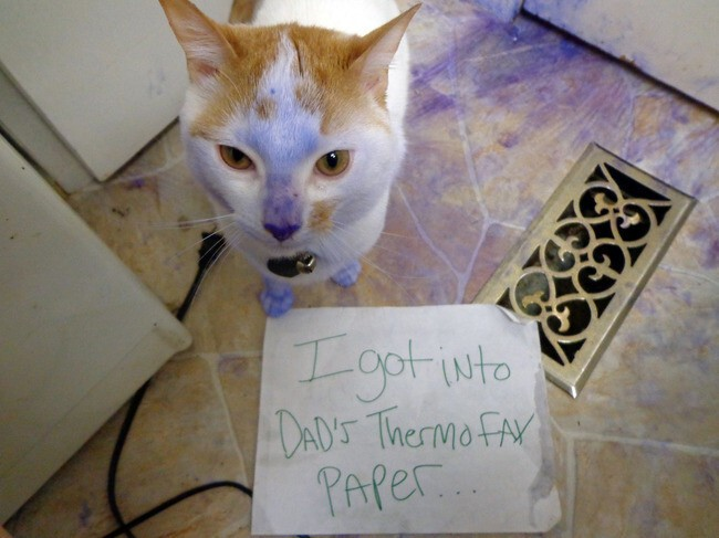 40 Guilty Cats Who Deserve To Be Shamed Publicly