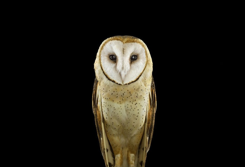 Keepers Of Wisdom: The Mystical Beauty Of Owls