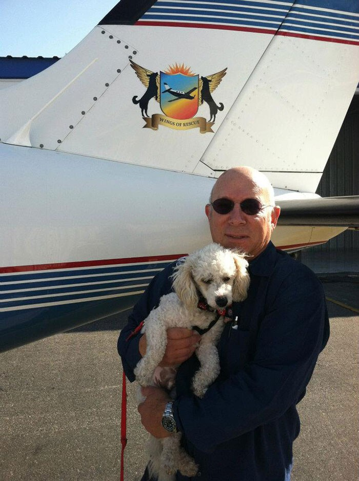 Volunteer Pilots Fly Shelter Dogs To New Homes