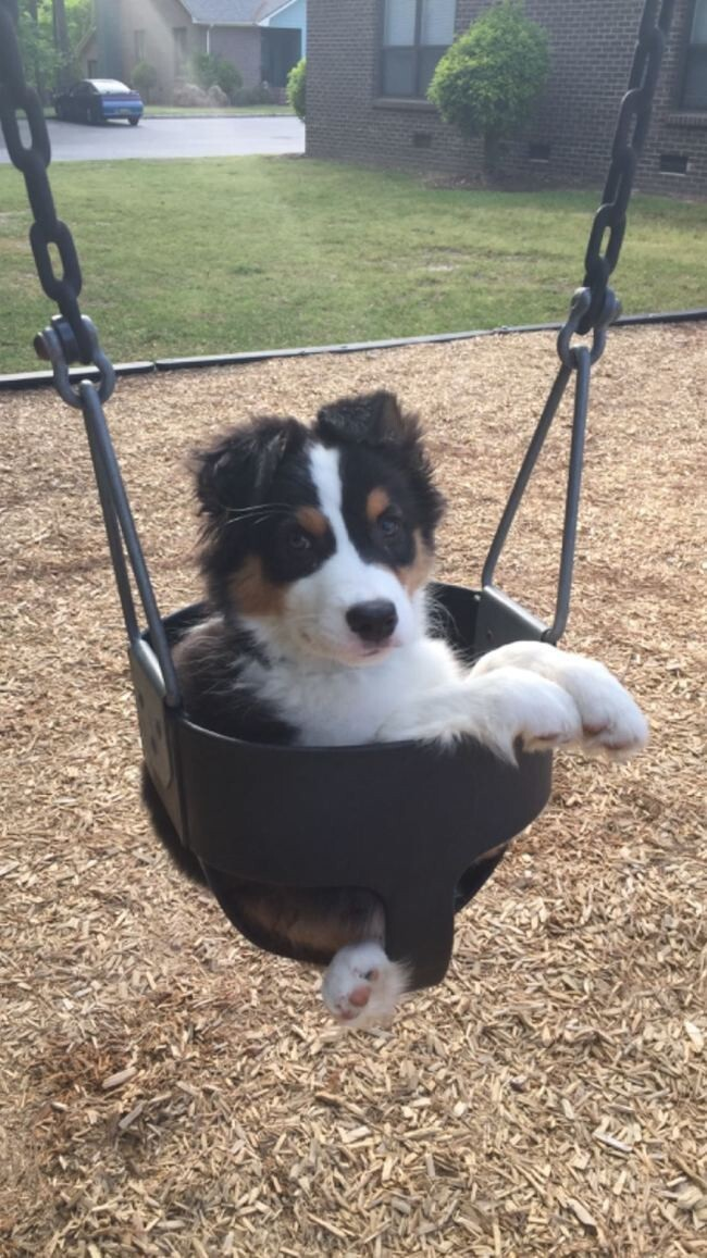 This playful puppy who loves going to the park.