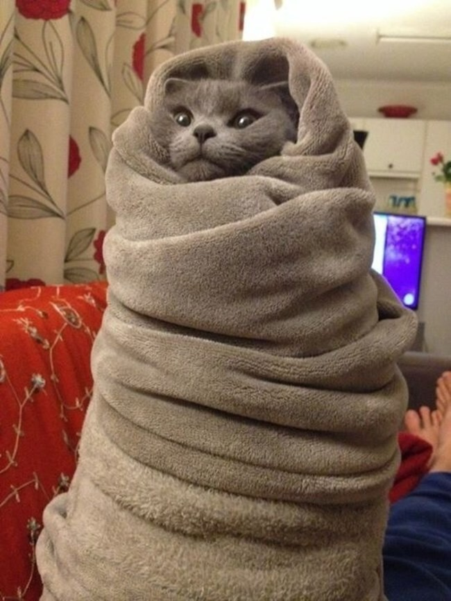 This cat who is so pleased to get out of this ridiculous blanket until the cold returns again next year!