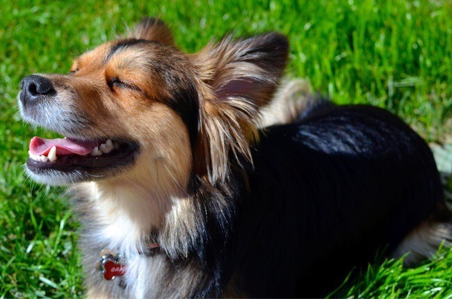 This relaxed dog remembering the amazing feeling of the warm Sun on his snout.