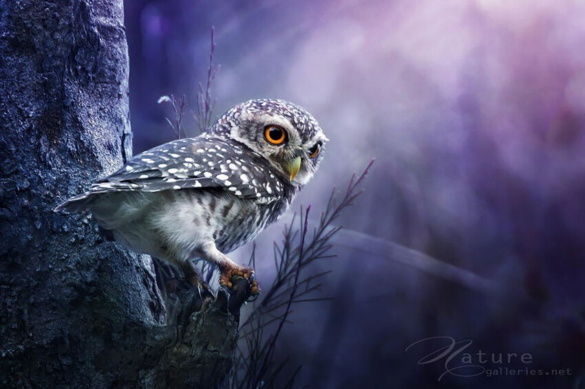 Adorable Owl Photos Captured By Thai Photographer Sasi