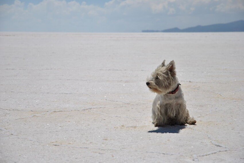 Day 188: Roaming Free On The World's Largest Salt Flat