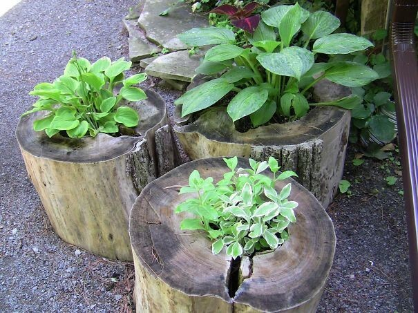 Old Tree Stumps Turned Into Beautiful Flower Planters