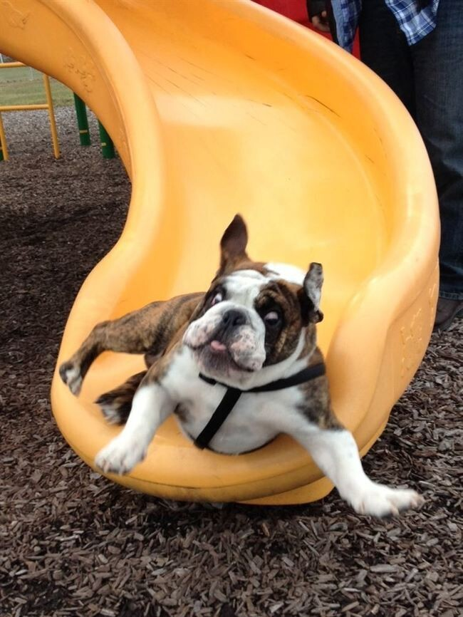 17 Dogs On Slides Learning About Gravity The Hard Way