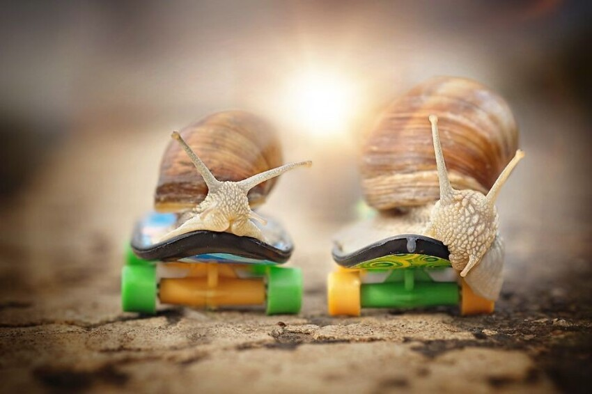 Beautiful And Courageous Snails
