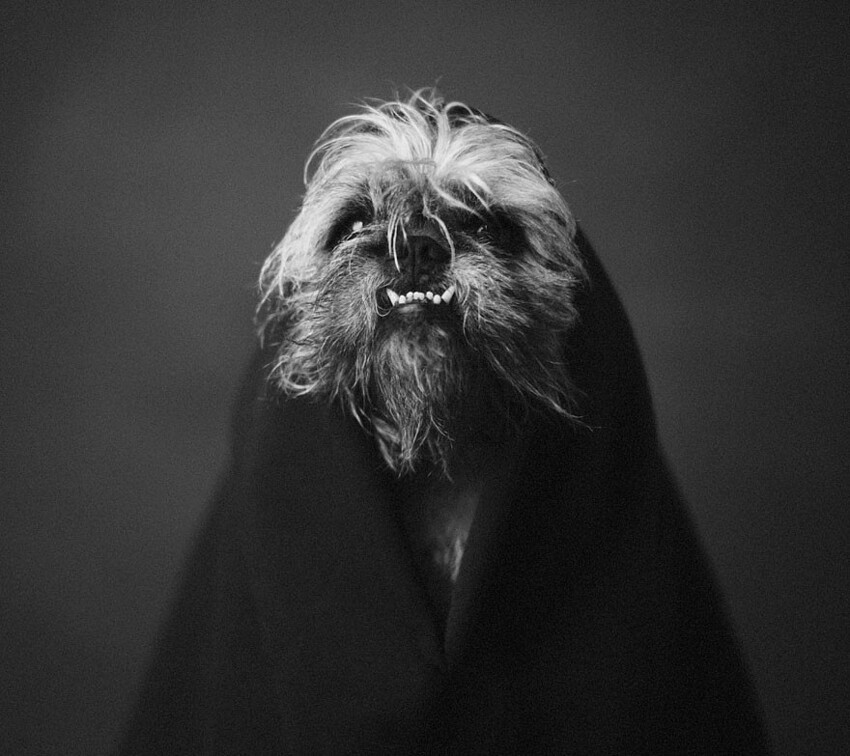 Expressive Animal Portraits Reveal Their Strong 'Human' Emotions