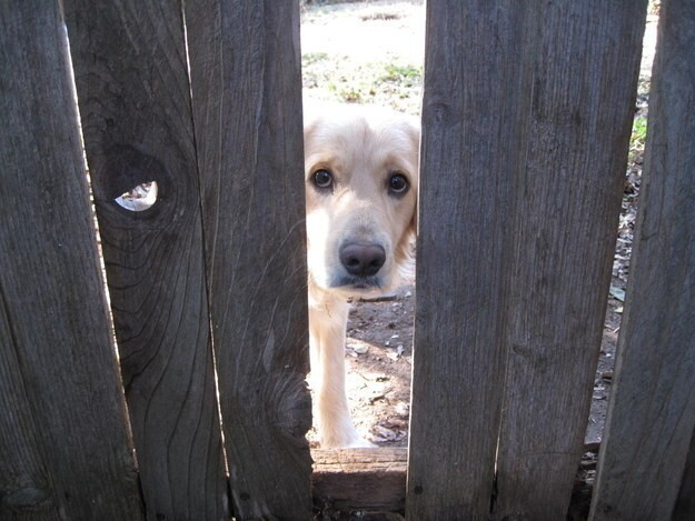"""Please don't fix this hole in the fence…I just love seein' your pretty face every day!"""
