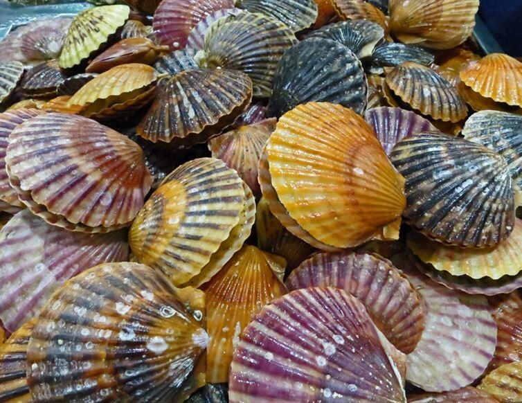 3. Scallops have as many as 100 simple eyes that are frequently blue.