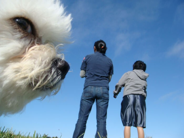 20 Perfectly Timed Photos That Turn Dogs Into Giants