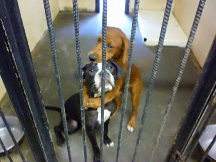 Shelter Dog Hugs Her Friend Hours Before Euthanasia And Saves Their Li