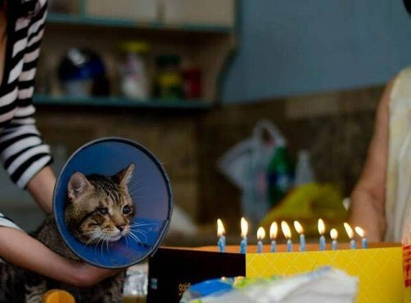Just your typical cat birthday party
