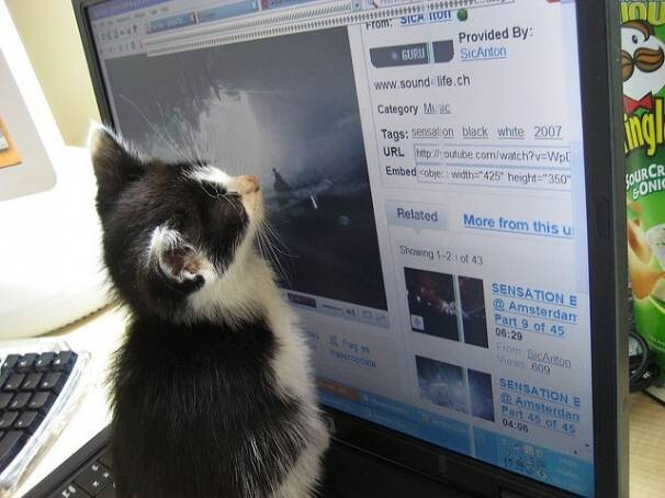 Casually surfing the web
