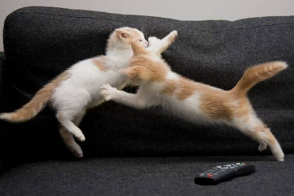 Fighting for the remote