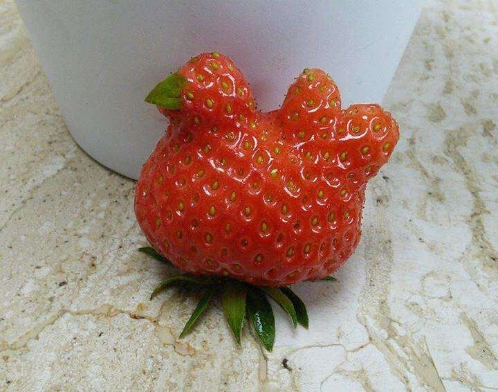 2. Strawberry, don't you know you're not a bird?