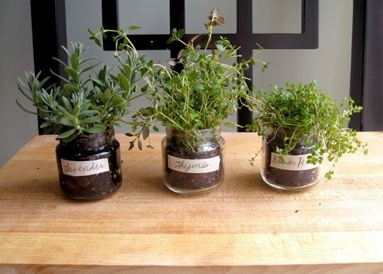 Grow your own herb garden no matter how small your space is.