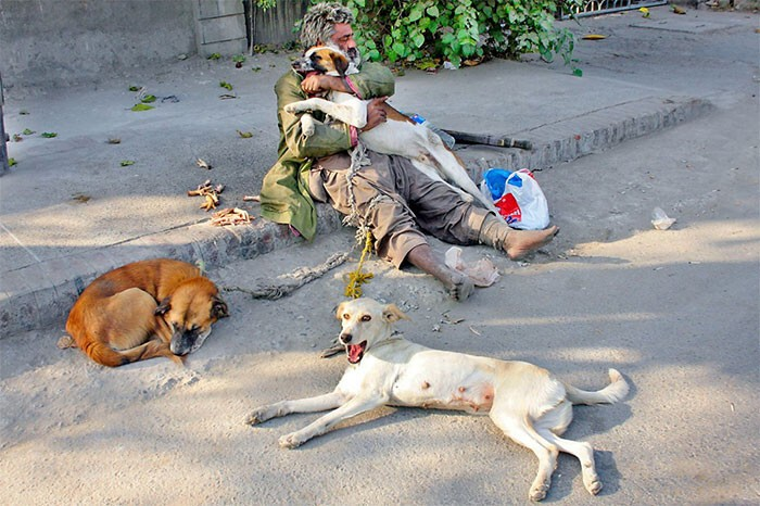 #41 Homeless Man With His 3 Dogs On The Streets Of Lahore