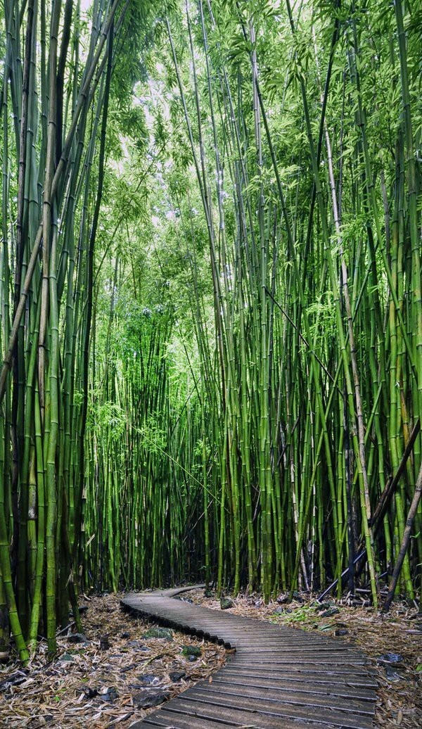 9 Bamboo Bliss