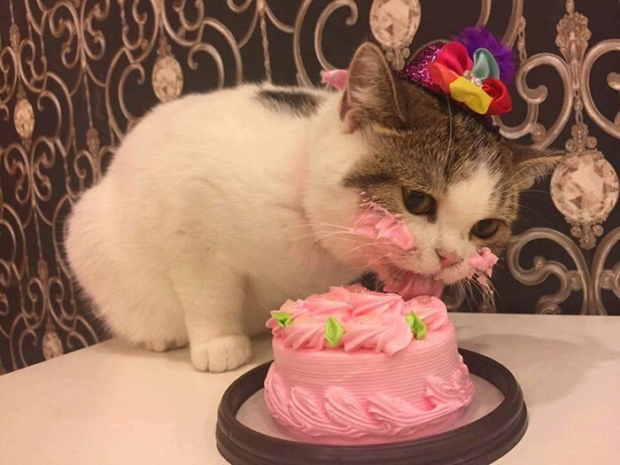 This Cat Eating A Cake On His Birthday Is Hilariously Adorable