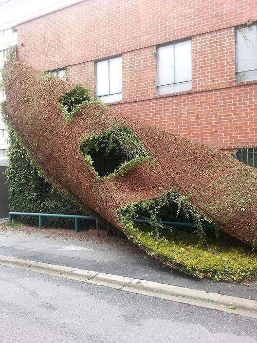 2. Oh good, a pull-and-peel wall garden!